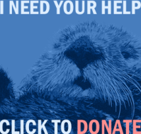 Donate to The Otter Project here